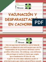 Vacunacion y Desparasitacion en Cachorros
