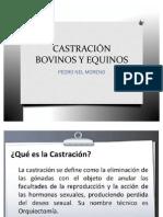 CASTRACION