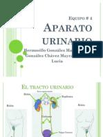 APARATO URINARIO[1]