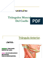 Triángulos Musculares Del Cuello