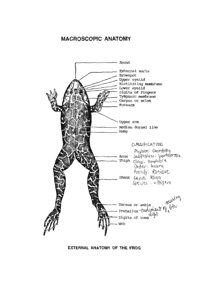 Frog Atlas