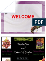 Production and Export of Grapes