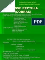 Classe Reptilia (Cobras)
