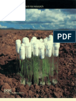 IRRI Annual Report 1990-1991