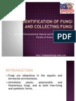 Identification of Fungi