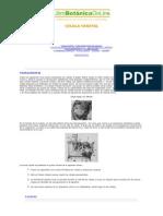 Celula Vegetal - Librobotanicaonline - Celula Vegetal