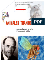 Animales Transgenicos Curso Biotecnologia Medica.2011.-Ultimoppt