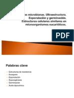 Esporas microbianas