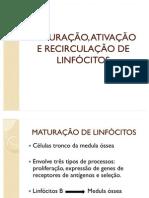Maturação, Ativação e Recirculação de Linfócitos