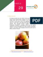 Procesamiento Del Mango