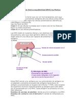 Complejo Mayor de Histocompatibilidad.docbymatias-sama[1]