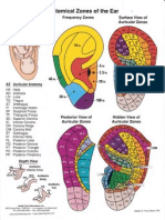 anatomical zones of the ear