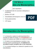 bioenergeticos