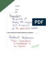 Homeostasis Study Guide