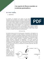 ensayo de la fauna guatemalteca