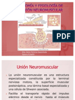 Anatomía y fisiología de la unión neuromuscular
