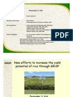 New efforts to enhance the yield potential of rice through GRiSP