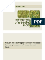 Management of Weedy Rice_preventive Measures