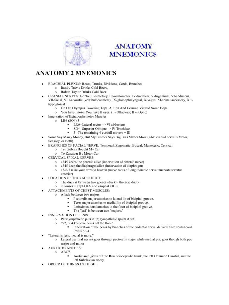 Anatomy Mnemonics | Common Carotid Artery | Anatomical Terms Of Location