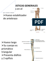 cubito anatomia