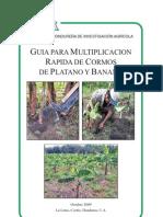 Multiplicacion Rapida de Cormos de Platano y Banano