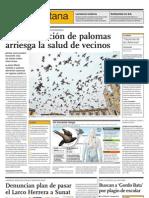 Sobrepoblación de palomas arriesga la salud de vecinos