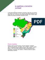 Ecossistemas aquáticos e terrestres existentes no Brasil_bio