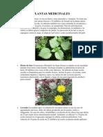 15 plantas medicinales