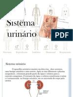 trabalho de histologia