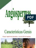 Angiospermas - Aula 8