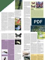 The Peninsula Skolly butterfly