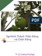 Ht Than Rang