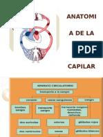 2.-Anato Red Cap y Sangre (1)