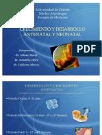 Crecimiento y Desarrollo Antenatal y Neonatal. Seminario 2