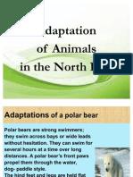Adaptation of a Polar Bear.3
