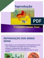 Reproducao - Gametogenese e fecundação