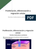Proliferación, diferenciación y migración celular