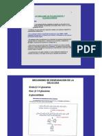 Degradacion de polisacaridos