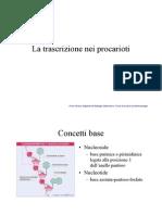 trascrizioneprocarioti