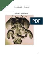 Genetic Analysis in Drosophila