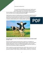 Laptele Pasteurizat Cauza Imbolnavirilor