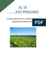 La plantación de té