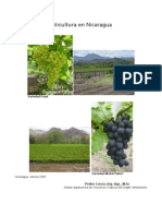 Documento Viticultura en Nicaragua
