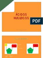 8-ACIDOS NUCLEICOS