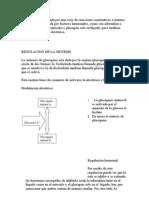 regulacion glucogeno
