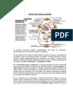 TIPOS DE CIRCULACION