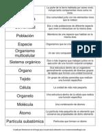 Niveles de organización de la materia sobre la Tierra nomenclatura