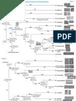Kilroy Guide to Common Diatom Genera in Fresh Waters 2004