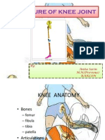 Knee Structure Ppt