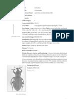 012 Beetles Curculionids II
